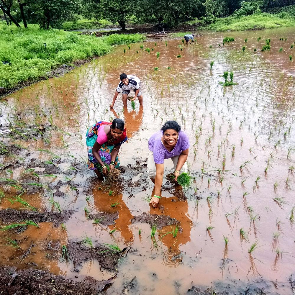 payal-planting-organic-rice-at-umang-wwti-organic-farming